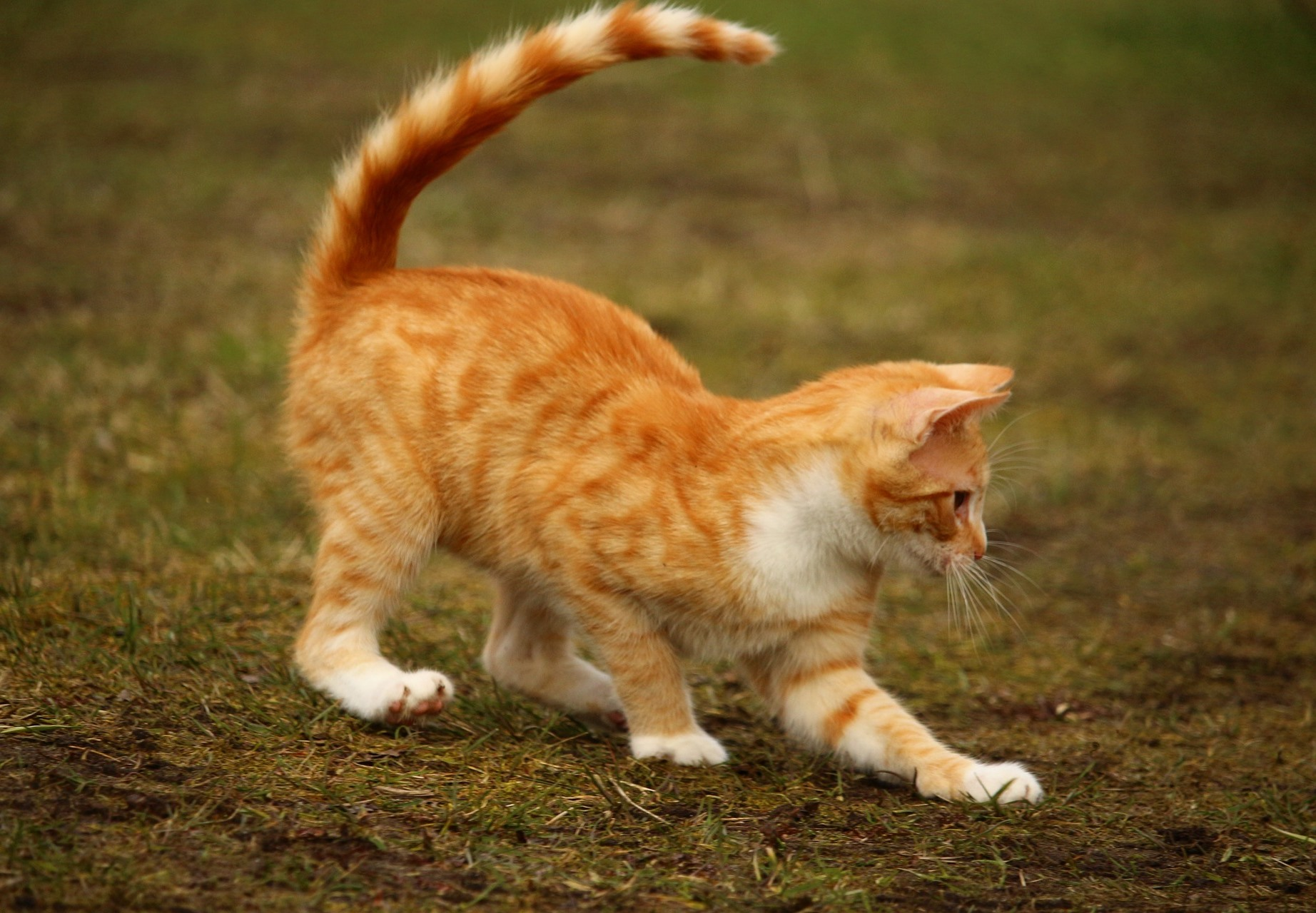 Can a Cat's Tail Be Double-Jointed?