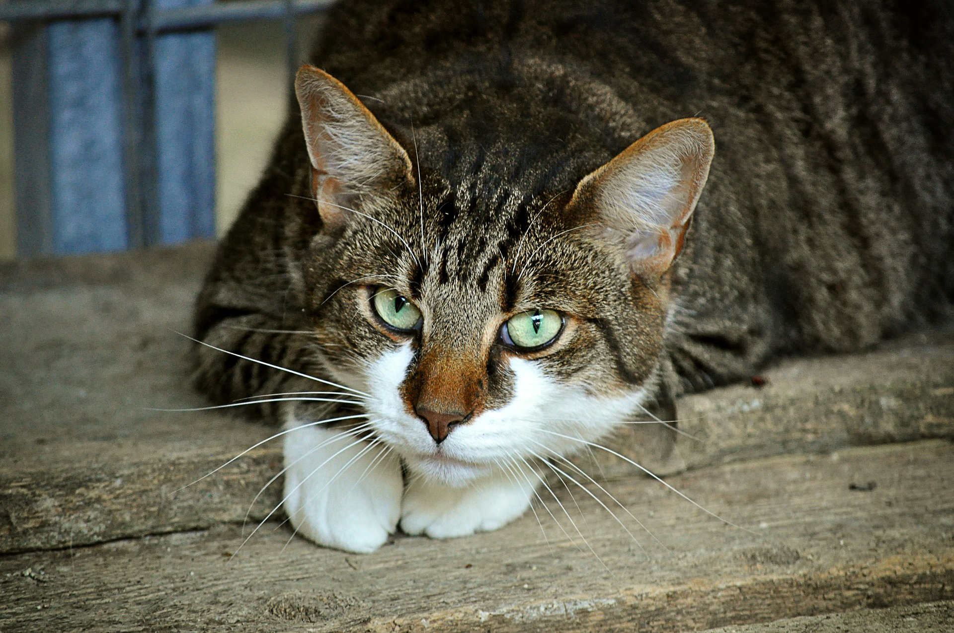 Blood in Cat's Anus: Can Cancer Be Cause?
