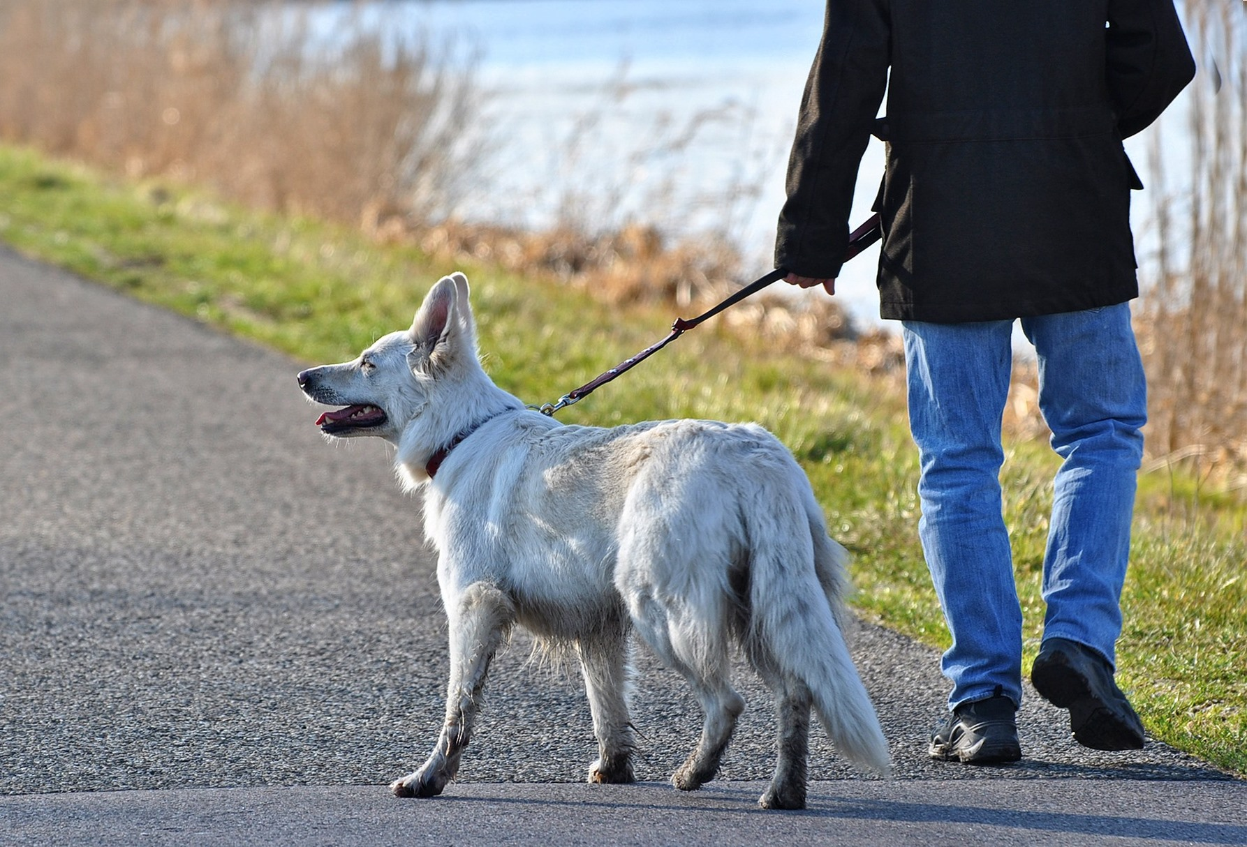 Are Dog Owners More Physically Active and Fitter?