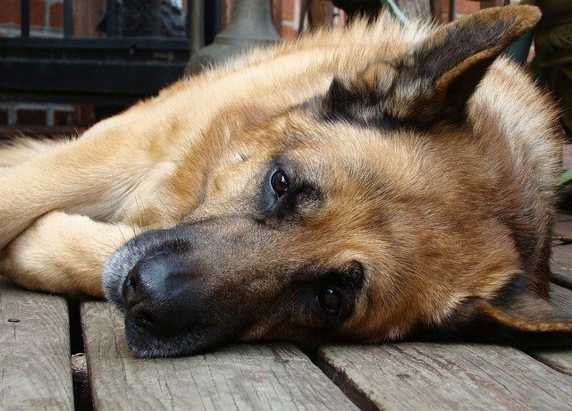 Anti-Cancer Diet for Dog with Cancer