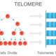 Telomerase Breakthrough: Cancer Cure & Aging Secrets on the Horizon?