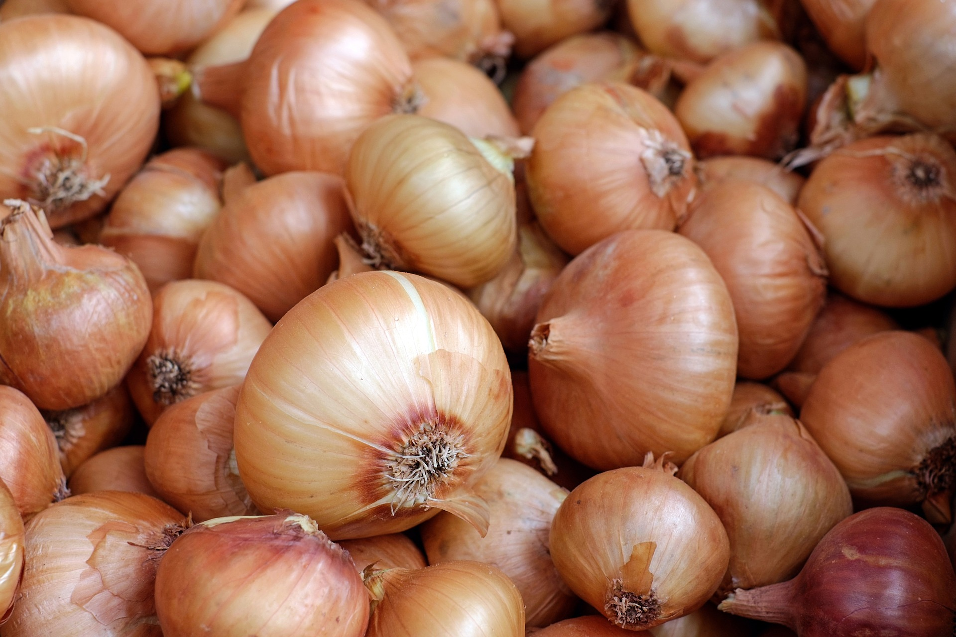 You Smell Like Onions Because…