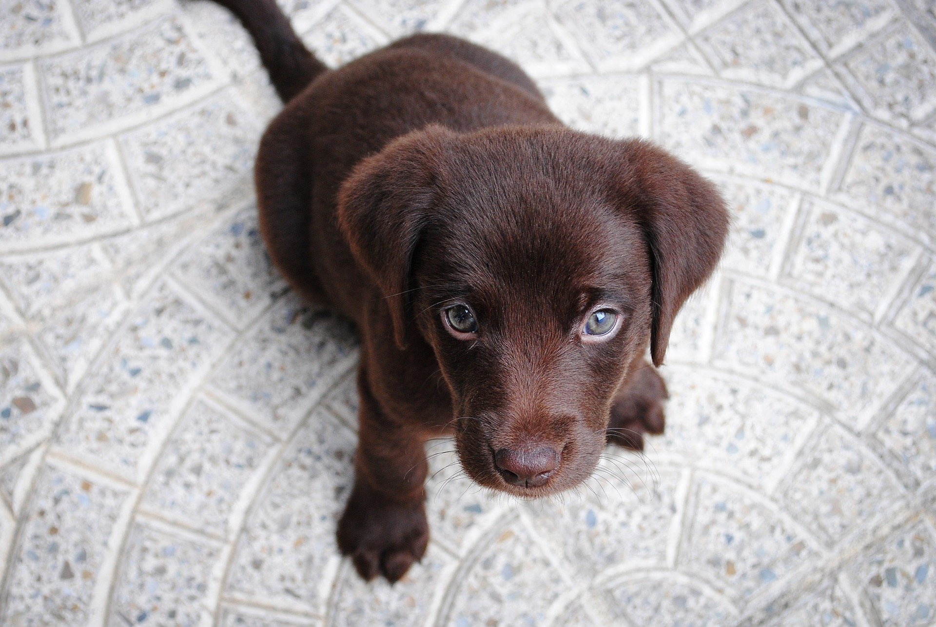 How Much Should a Parent Take Care of Child's Puppy?