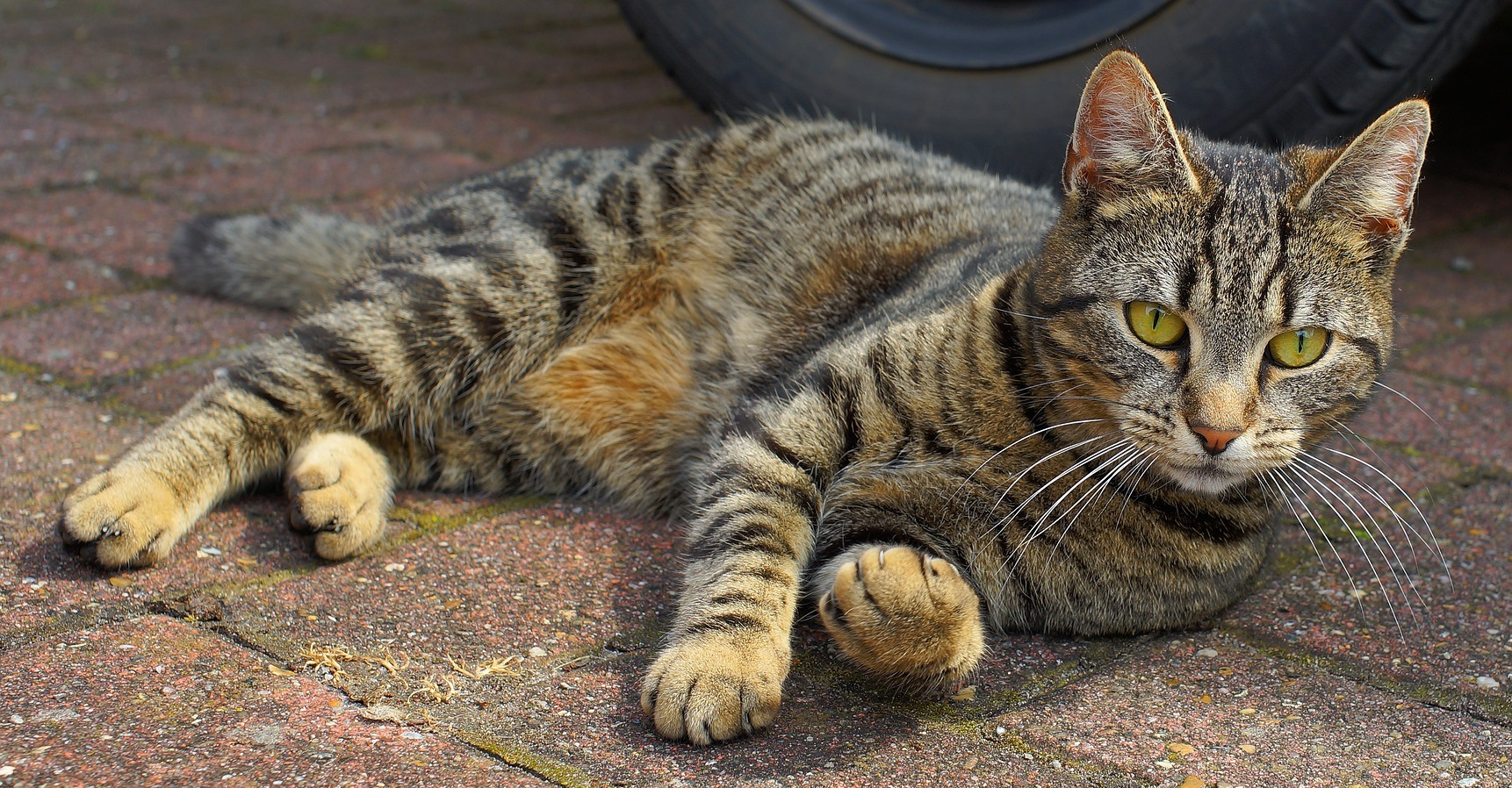Can Diarrhea in a Cat Be Caused by Cancer?