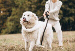 Older Women Afraid of Bone Fracture from Dog Walking: Solutions